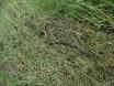zmija-a-hebranga-80osijek-24-05-2014-1