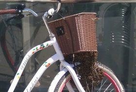 Pcele-na-biciklu